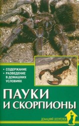 Пауки и скорпионы. Содержание. Разведение в домашних условиях