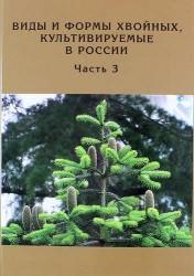 Виды и формы хвойных, культивируемые в России. Часть 3. Abies Mill., Chamaecyparis Spach