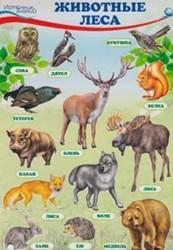 """Познавательные мини-плакаты """"Окружающий мир. Животные и растения"""" (комплект из 4 плакатов)"""