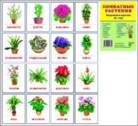 Комнатные растения. Раздаточные карточки. 16 штук